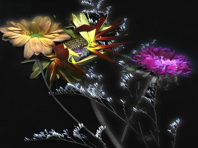 Still Life: Flora Nocturne